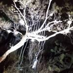 Asegura SSPH inhibidores de señal satelital en Tepeji