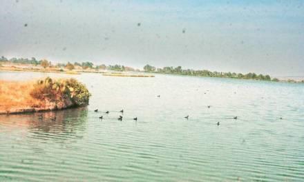 Denuncian quema de tules en la Laguna de Zupitlán