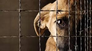Proponen castigar la zoofilia y el abandono de mascotas en Hidalgo