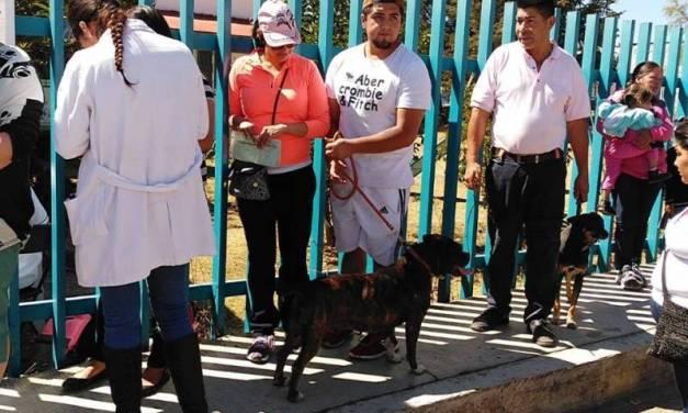 Continúan en Tulancingo las denuncias por maltrato animal