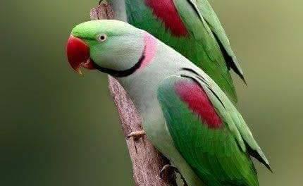 Más del 60% de las especies de aves que hay en México están en peligro, señala investigador de la UAEH