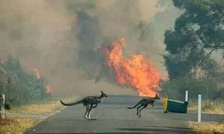 Incendios en Australia han dejado 21 personas muertas