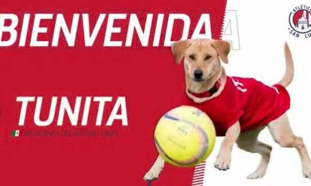 Presentaron a «Tunita» como nuevo refuerzo del Atlético de San Luis