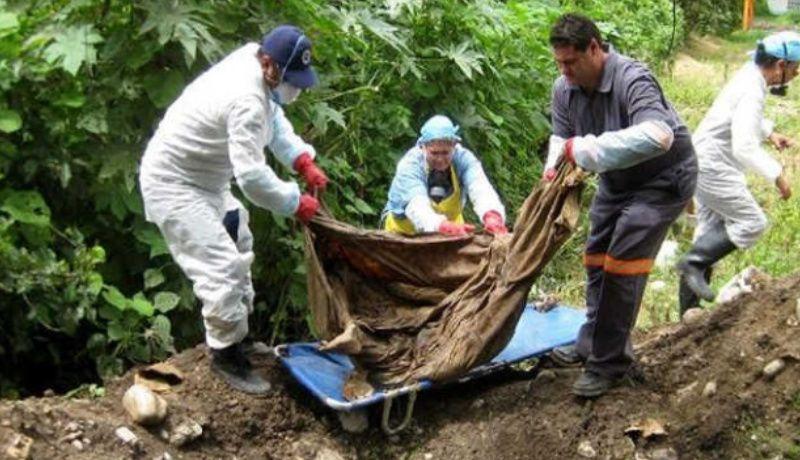 Hallan 24 cadáveres en fosa clandestina de Michoacán