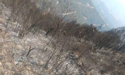 Instancias participantes finiquitan incendio en Nicolás Flores