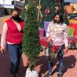 Concejo Municipal Interino mineralreformense entrega pinos navideños a bajo costo