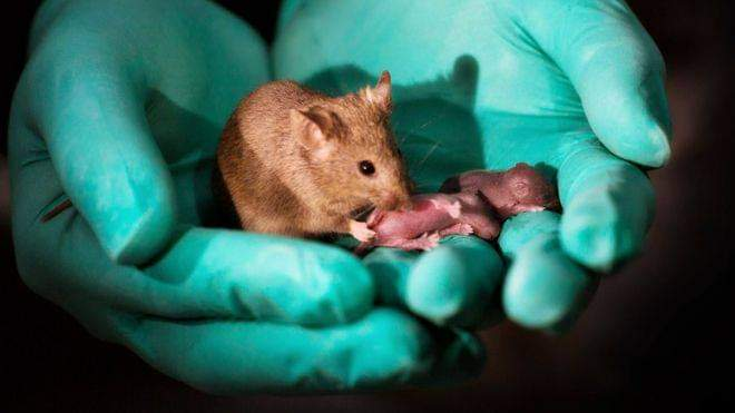 Urgen a la Cámara de Diputados federal a prohibir experimentos con animales